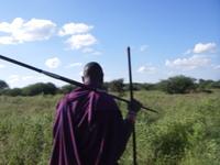 Amboseli_walk