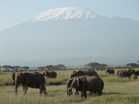 Elephant_kilimanjaro