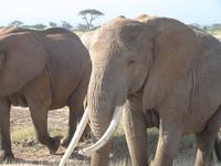 Elephant_up