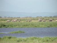 Elephant_water